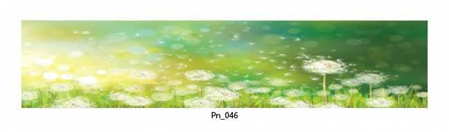 Pn_046